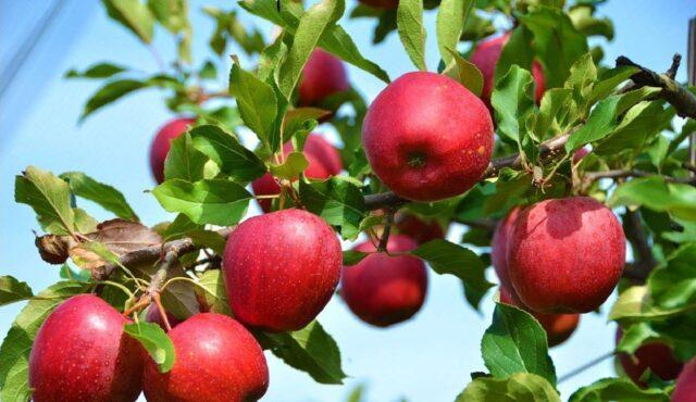 На Вінниччині висадили яблуневий сад в пам'ять про загиблих захисників України