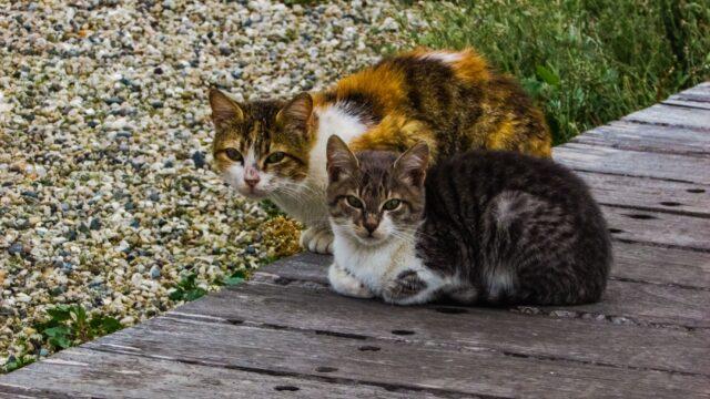 У Вінницькій міській ОТГ планують безкоштовно стерилізувати щонайменше 620 безпритульних кішок