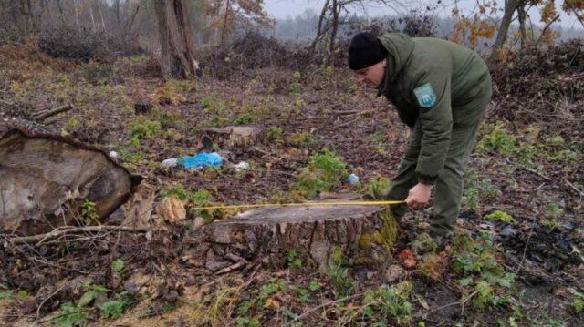 На Вінниччині незаконно вирубали дерева на понад 12 мільйонів гривень