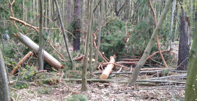 """Понад 3 мільйони шкоди: на території """"Тульчинського райагролісу"""" незаконно вирубали 231 дерево"""