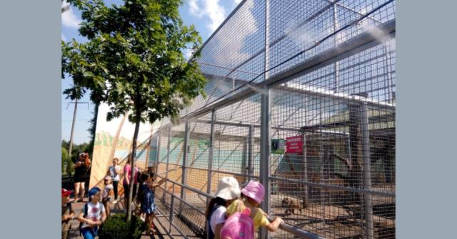 """Звіринець у тумані: в """"Подільському зоопарку"""" для комфорту тварин і людей встановили туманоутворювач. ФОТО"""