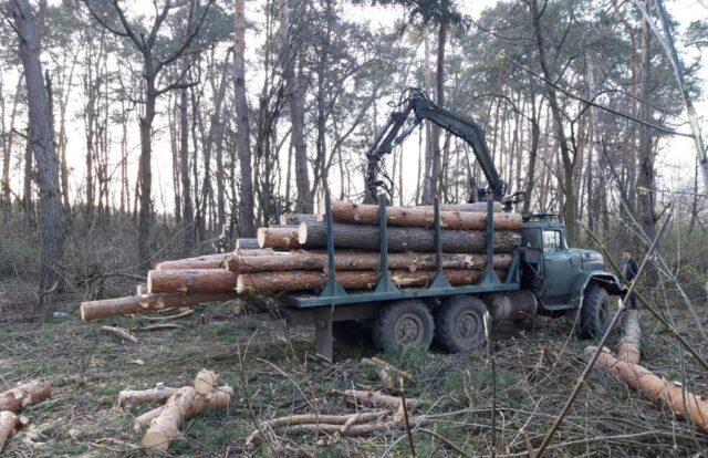На Вінниччині правоохоронці викрили злочинну групу, яка незаконно вирубувала ліс. ФОТО
