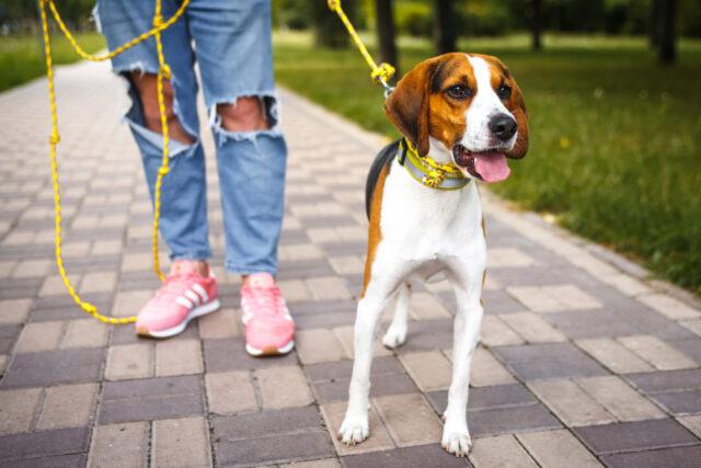"""На """"Академічному"""" у Вінниці просять облаштувати майданчик для вигулу собак. ПЕТИЦІЯ"""