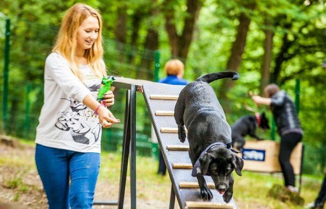У Вінниці пропонують облаштувати майданчики для вигулу собак. ПЕТИЦІЯ