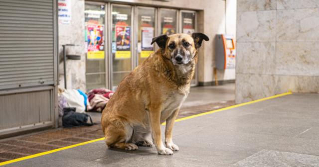 У Вінниці взяли під варту чоловіка, підозрюваного у жорстокому вбивстві собаки