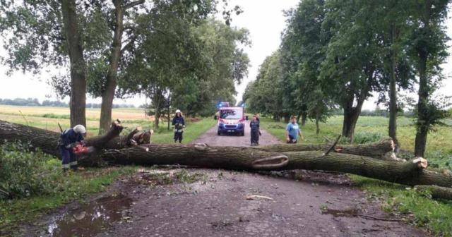 Повалені дерева та знеструмлення 29 населених пунктів: наслідки негоди на Вінниччині. ФОТО, ВІДЕО