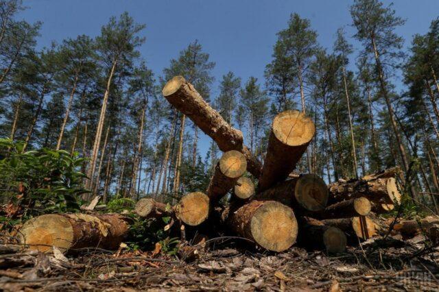 Держекоінспекція виявила на Вінниччині незаконну вирубку 22 тисяч дерев