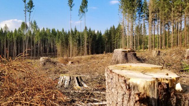 Вінниччина – у п'ятірці лідерів за кількістю злочинів проти довкілля, які розслідує ДБР. ГРАФІКА