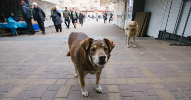 У Вінниці ухвалили нову Програму регулювання чисельності тварин гуманними методами