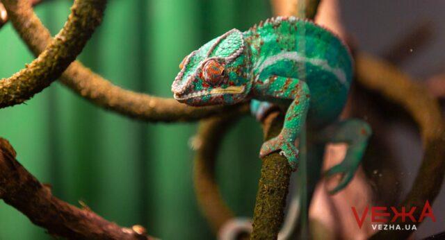 У Вінниці триває виставка жаб і рептилій. ФОТОРЕПОРТАЖ
